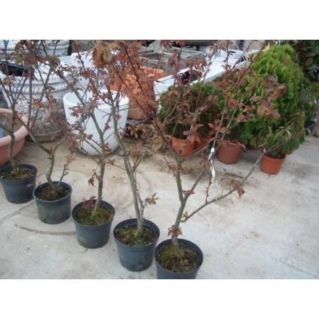 Como transplantar un prunus de la maceta casa dise o - La casa de la maceta ...